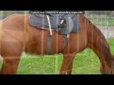 «конно-спортивнный комплекс